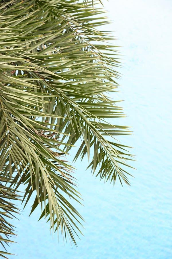 Die frischen Palmbl?tter auf dem sch?nen Trinkwasserhintergrund stockbilder