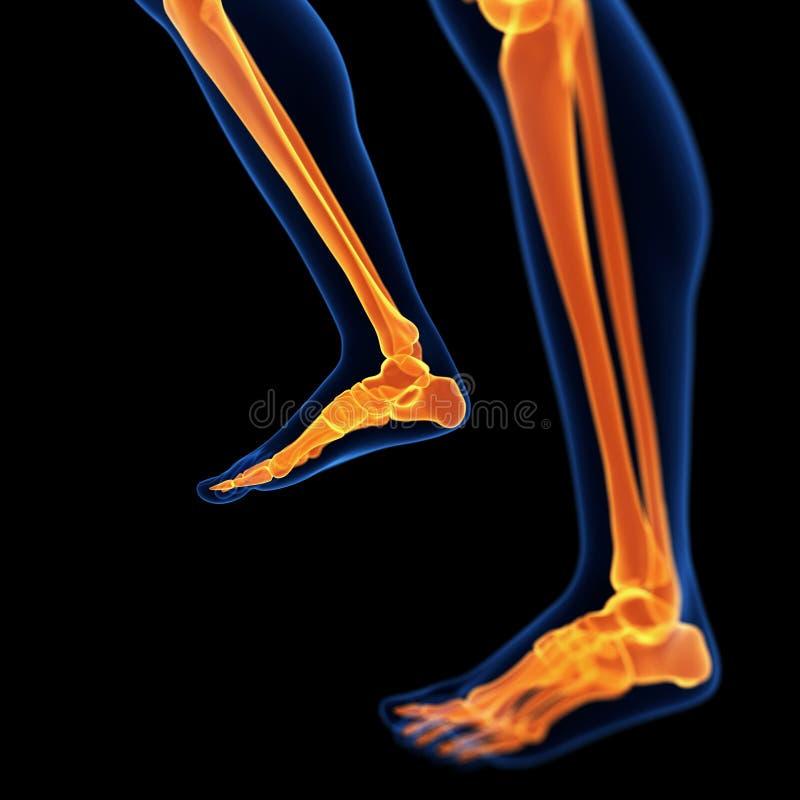 Die Fuß- und Beinknochen stock abbildung. Illustration von orange ...