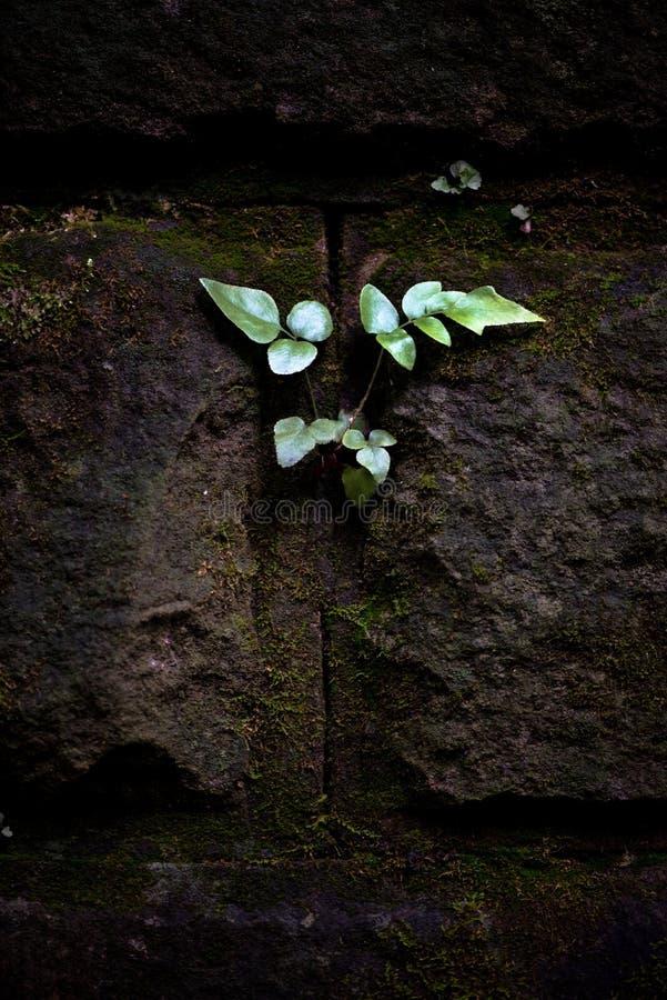Die Funktion von wild wachsenden Pflanzen stockbilder