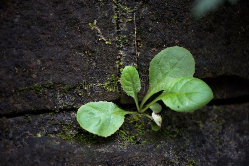Die Funktion von wild wachsenden Pflanzen lizenzfreie stockfotos