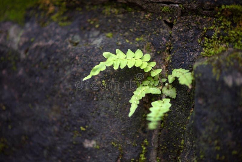Die Funktion von wild wachsenden Pflanzen stockfotografie