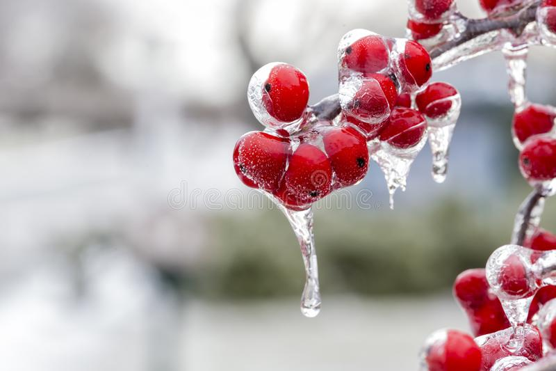 Die gefrorene rote Frucht lizenzfreie stockbilder