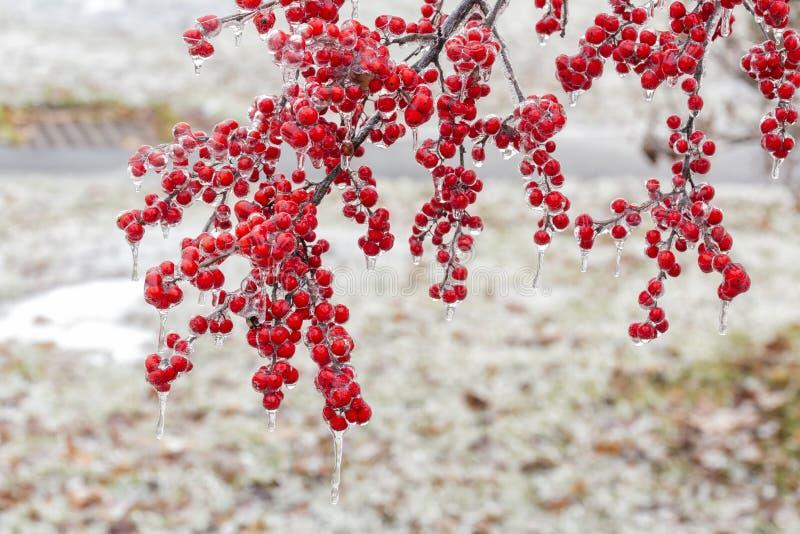 Die gefrorene rote Frucht stockbilder