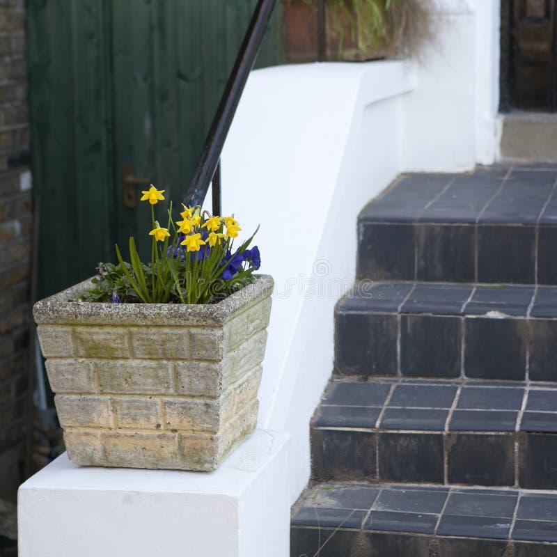 Die gelben Narzissen und die blaue Primel im quadratischen Topf als Dekoration des Eingangs zum Haus nahe dem Steintreppenhaus stockfotografie