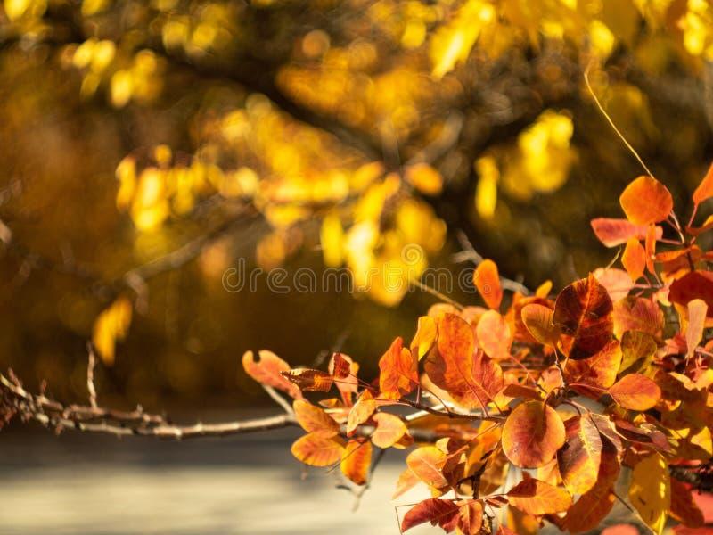 Die gelben und roten Blätter, die an den Baumasten im Herbstwald hängen, schließen herauf Ansicht Buntes Laub im Oktober, Natur lizenzfreie stockfotos
