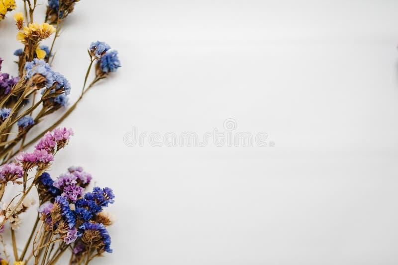 Die getrocknete Zusammensetzung färbte Blumen auf einem weißen Hintergrund Kopieren Sie Platz Romantische Blumen Platz für Text u lizenzfreies stockbild