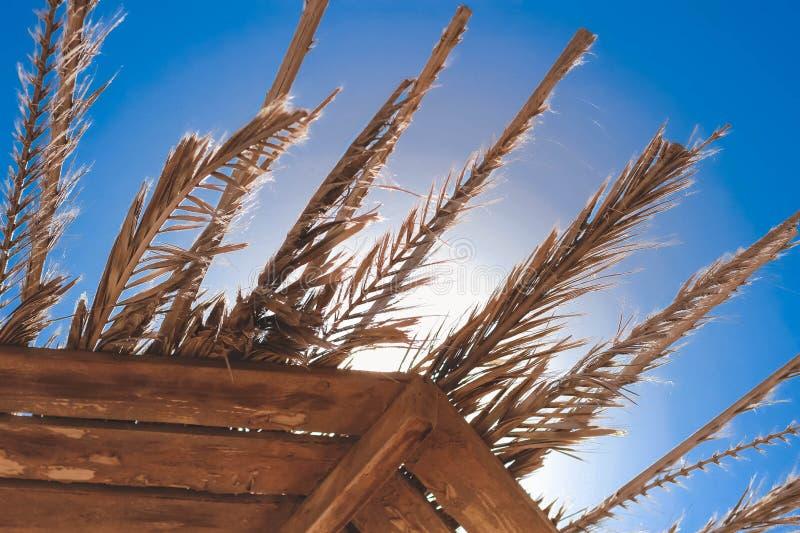 Die getrockneten Blätter einer Palme stellen einen Schatten her Sie liegen auf einem Markisendach Erscheinen Sie durch Sonnensche stockbilder