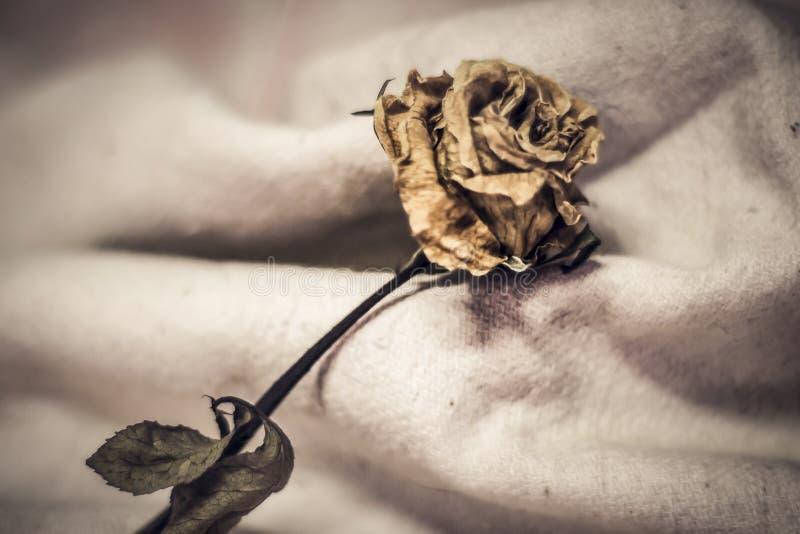Die getrockneten rosafarbenen Blumenblätter sind der fallender weiße Hintergrund, untröstlich, verloren oder enttäuschen unlovabl stockfotos