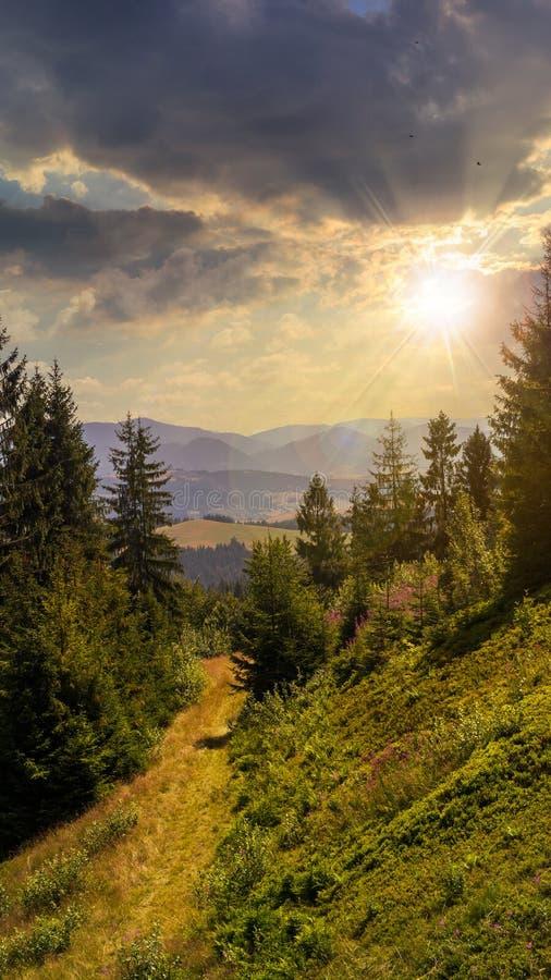 Die Glättung geht in Gebirgswald bei Sonnenuntergang lizenzfreie stockfotografie