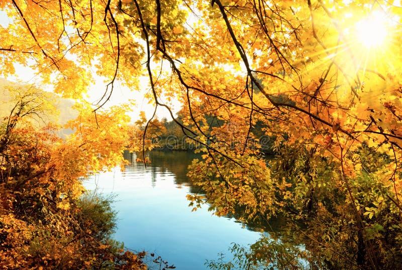 Die goldene Sonne des Herbstes stockfotografie