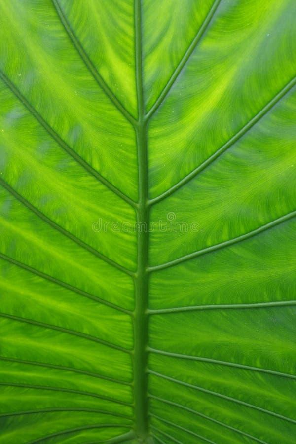 Die Grünblätter lizenzfreie stockfotografie
