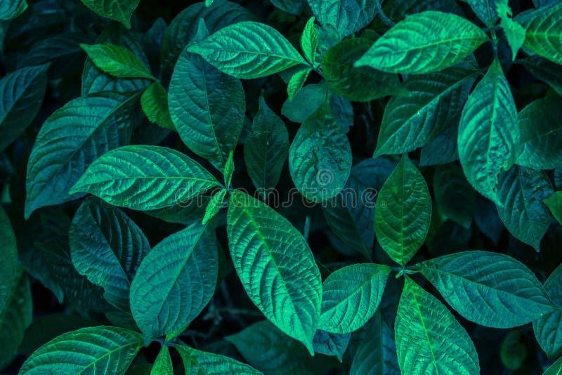 Die Grünblätter im Hintergrund stockbilder