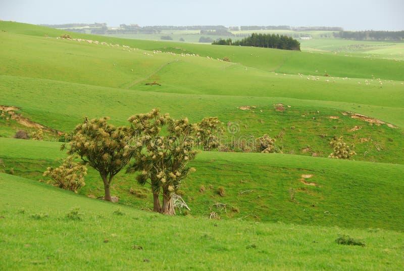 Die grüne Ranch lizenzfreies stockfoto