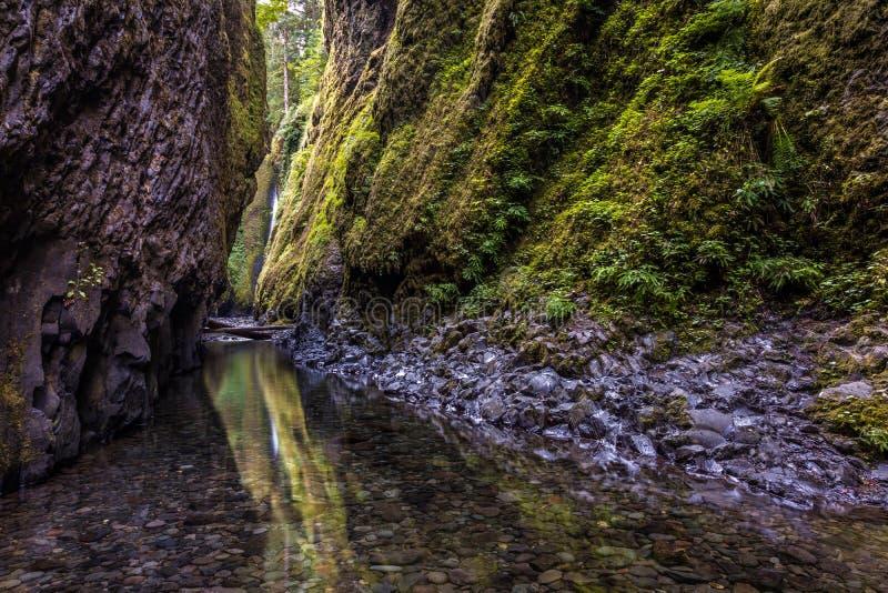 Die grüne Schlucht von Oregon stockbilder