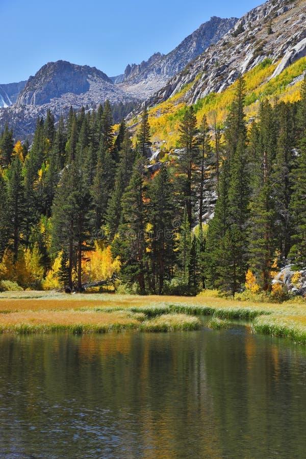 Die grünen Bäume und das gelbe Gras stockfoto