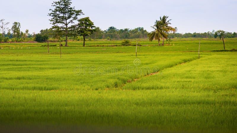 Die grünen Felder sind schön stockfoto