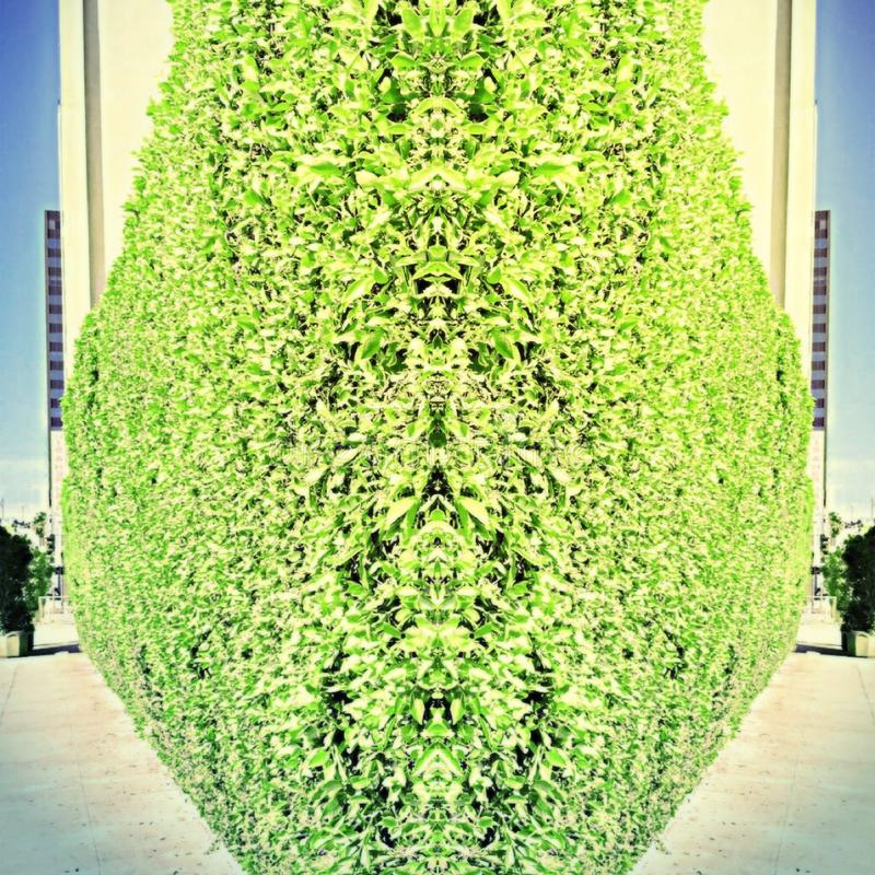 Die Gras-Wand stockfoto