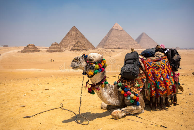 Die große Pyramide mit Kamel lizenzfreies stockfoto