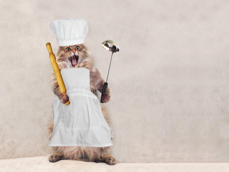 Die große rauhaarige Katze ist sehr lustige Stellung, Koch 2 stockfotos
