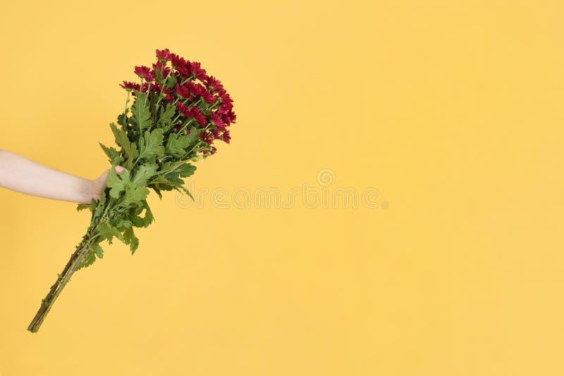 Die Hände der Frau halten rote Blumen mit grünen Blättern auf gelbem Hintergrund Flache Lage, Draufsicht Playnig mit Leuchte F?ge stockfoto