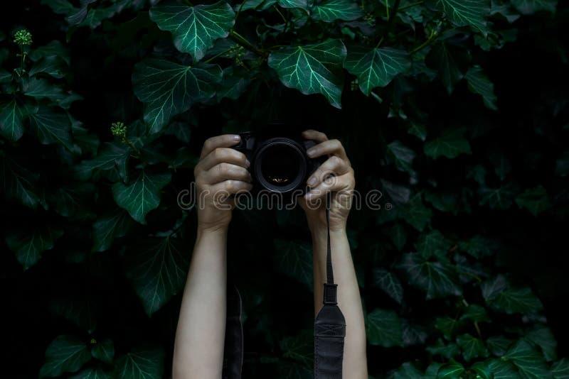 Die Hände der Frau, die Kamera halten und die Fotos versteckt in der Dunkelheit reißen stockfoto