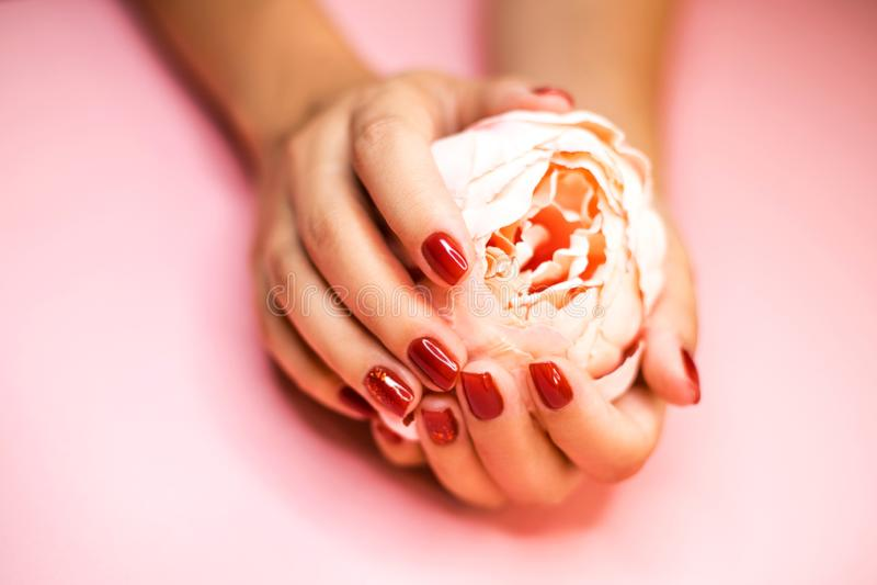 Die Hände der Frau mit roter Maniküreholdingblume stockbild