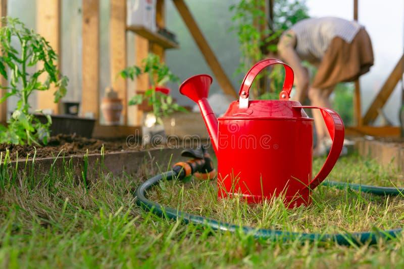 Die Hände der Frau, die Tomatensämlinge im Gewächshaus pflanzen Organisches Gartenarbeit- und Wachstumskonzept lizenzfreie stockfotos