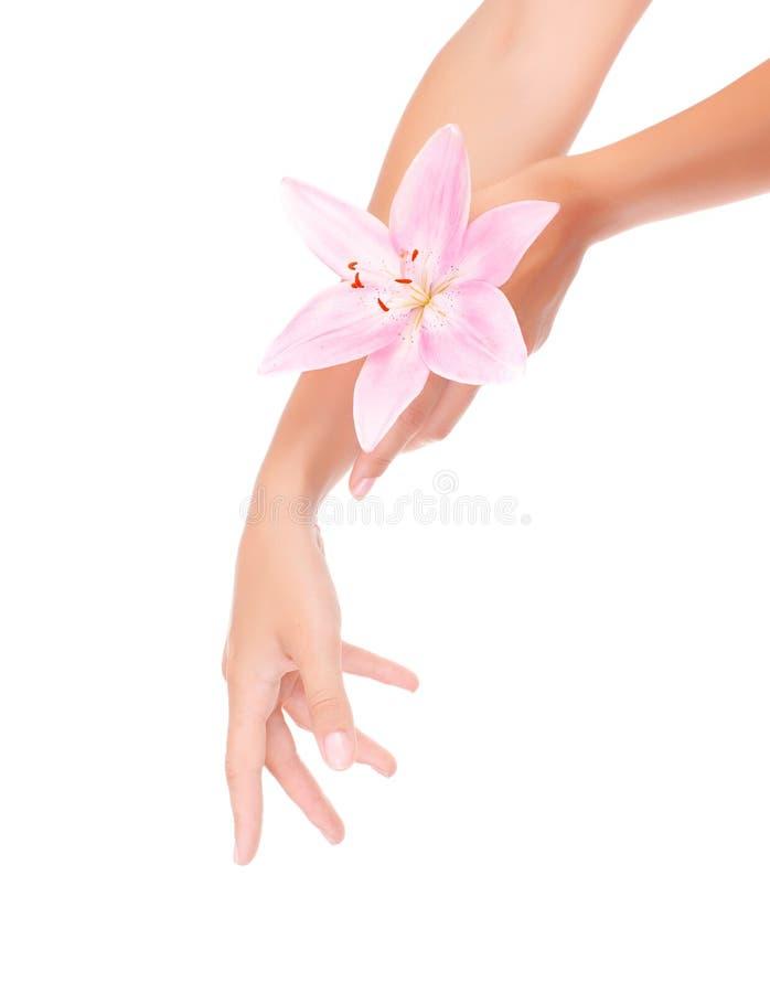 Die Hände der Frauen mit rosa Lilie lizenzfreie stockbilder