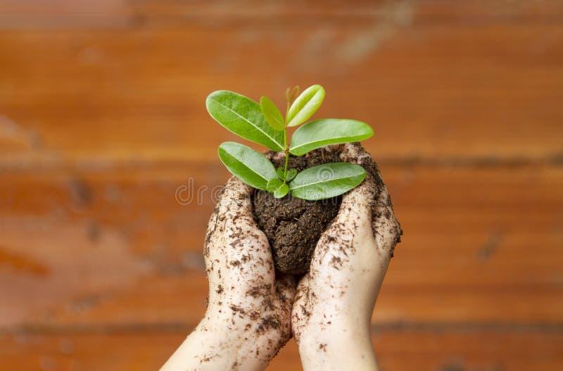 Die Hände der Kinder, die Jungpflanze halten lizenzfreies stockfoto