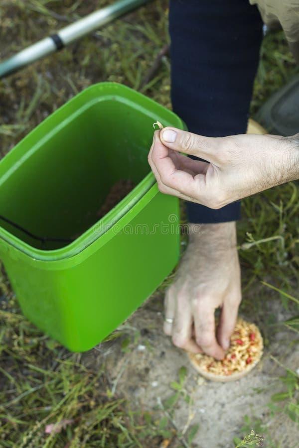 Die Hände des Anglers halten einen Haken mit den Larven von Fliegenlarven lizenzfreie stockfotos