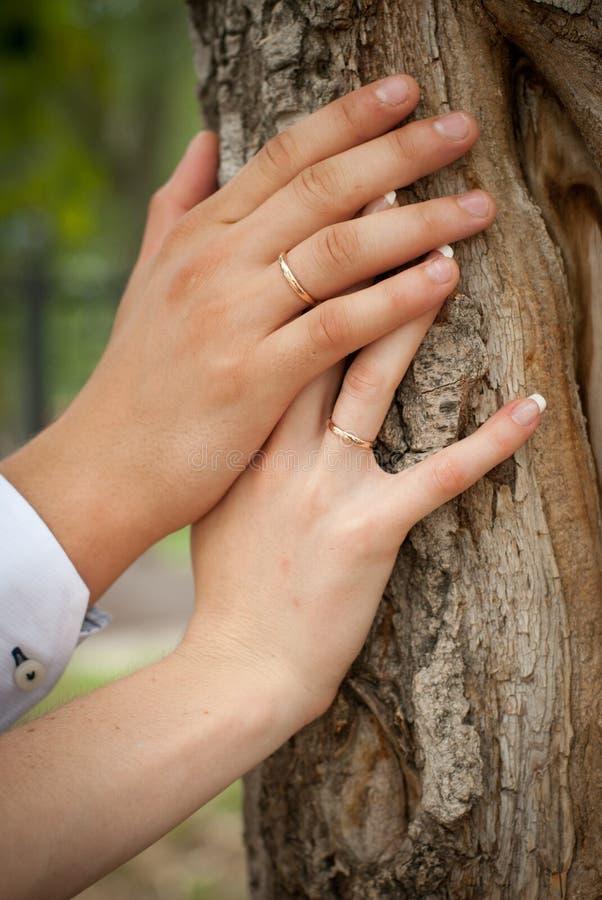 Die Hände des Paares mit Ringen schließen oben stockbild