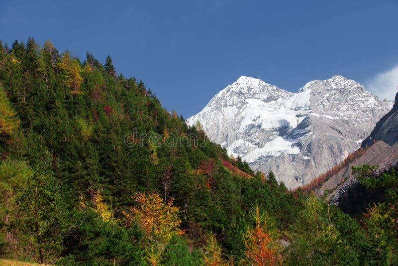 Die Hügel von der Schweiz im Fall stockfotos
