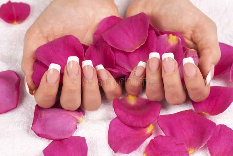 Die Hand der Schönheit, die rosa rosafarbene Blumenblätter hält stockbilder