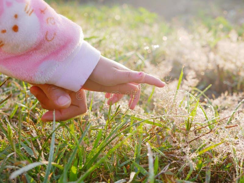 Die Hand des kleinen Babys mit der Unterstützung von der Mutter zum ersten Mal heraus erreichend, um Tautropfen auf Gräsern zu be stockfotos