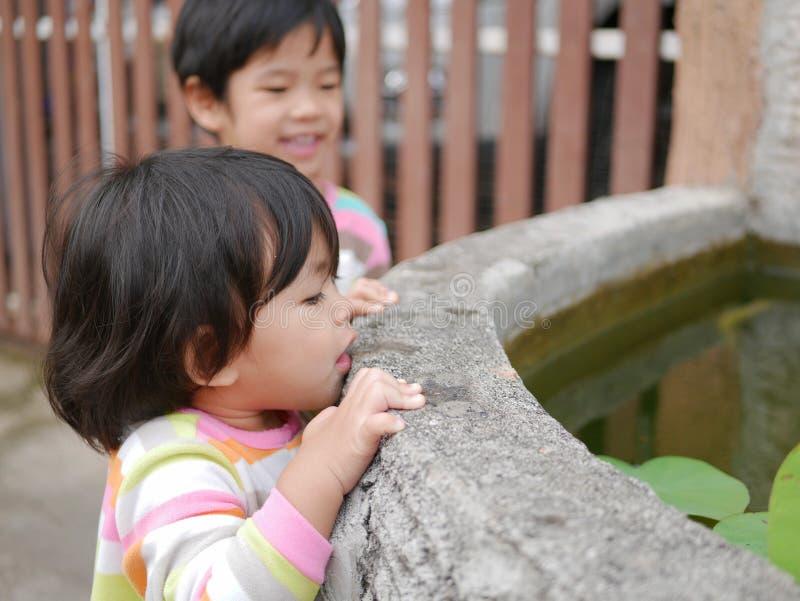 Die Hand des kleinen neugierigen asiatischen Babys, die am Rand eines Teichs versucht, zu sehen hängt, was inner ist lizenzfreie stockfotografie