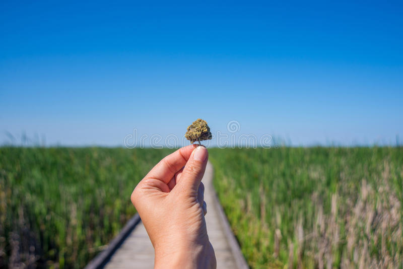 Die Hand, die Hanfknospe agains hält, schleppen und Landschaft des blauen Himmels lizenzfreies stockbild