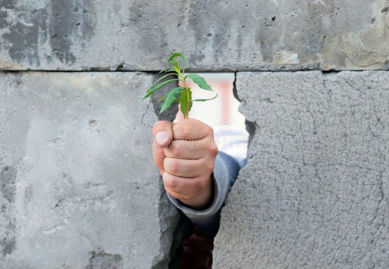 Die Hand eines Mannes, pre?te in eine Faust, Br?che durch eine Wand von grauen Betonbl?cken zusammen und gibt einen jungen gr?nen lizenzfreies stockbild