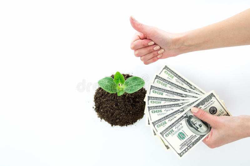 Die Hand hält Dollar und den Sprössling stockbild