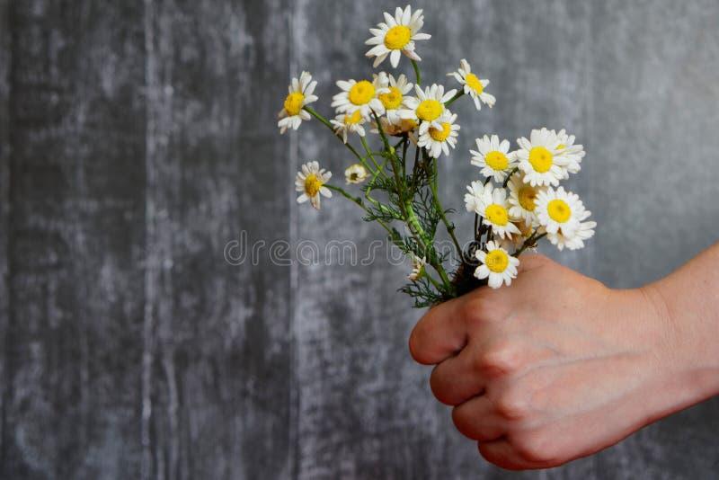 Die Hand hält einen Blumenstrauß der Kamille lizenzfreie stockbilder