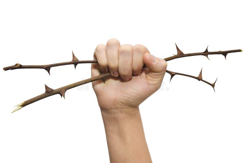 Die Hand hält stachelige Zweige an lizenzfreie stockbilder