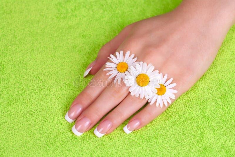Die Hand und die Nägel der Schönheit mit französischer Maniküre stockfoto