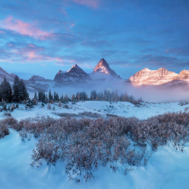 Die helle rote Sonne ?ber Oberseiten der Pelzb?ume Berg Assiniboine, alias Assiniboine-Berg, ist ein Pyramidenh?chstberg, der auf lizenzfreie stockfotografie
