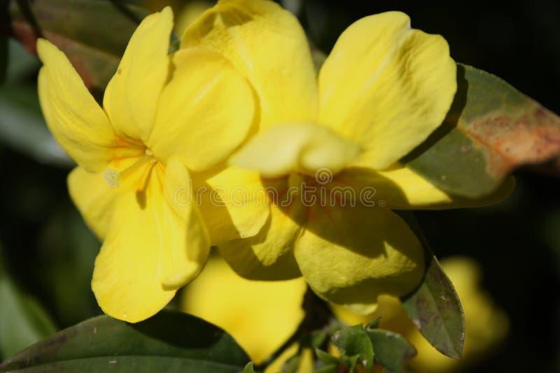 Die hellen Farben der Blumen blühen im Frühjahr stockbilder