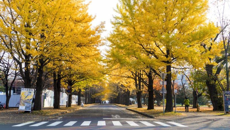 Die Herbstsaison in der Herbst Hokkaido-Universität stockbilder