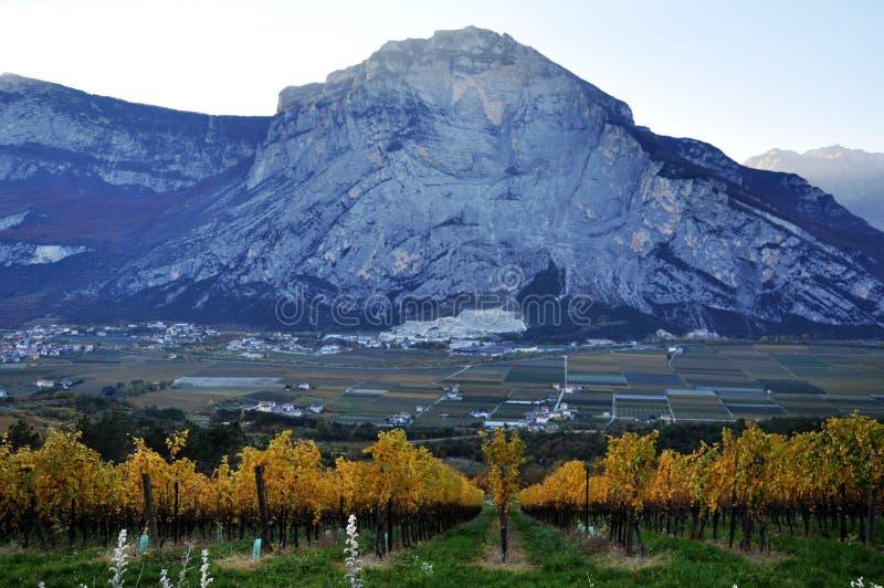 Die Herbstweinberge von Trentino in Italien stockbilder