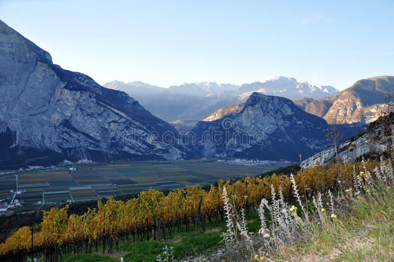 Die Herbstweinberge von Trentino in Italien stockbild