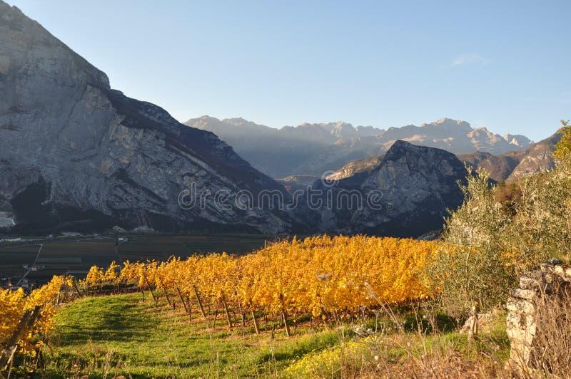Die Herbstweinberge von Trentino in Italien lizenzfreie stockfotografie
