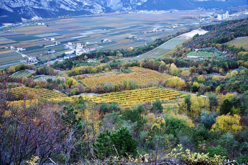 Die Herbstweinberge von Trentino in Italien lizenzfreies stockbild