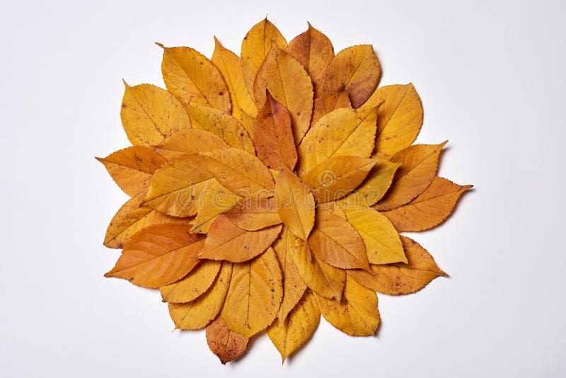 Die Herbstzusammensetzung, die vom Gelb gemacht wird, verl?sst auf wei?em Hintergrund Fall-Konzept Herbstdanksagungsbeschaffenhei stockfoto