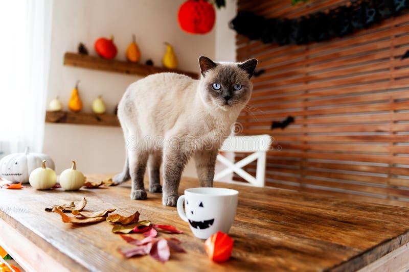 Die herrliche Haustierkatze, die auf Tabelle in Halloween-Thema steht, verzierte Wohnzimmer Lebensstil-Halloween-Jahreszeitfamili lizenzfreie stockbilder